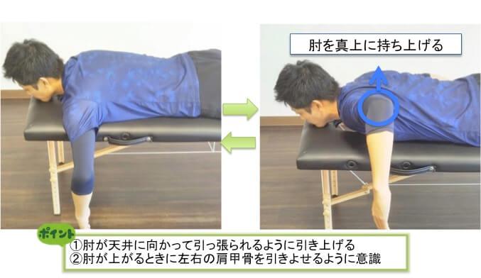 Tトレーニングは上部(オレンジ)・中部(赤)・下部(紫)と3つの繊維に分かれている僧帽筋という筋肉の中で真ん中に位置する僧帽筋中部を強化するトレーニングになります。