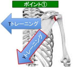 Yトレーニングでは肩甲骨を引きよせる方向がTトレーニングと違います。 上の図のように斜め下方向に向かって肩甲骨を引き寄せるのですが、Tトレーニングよりも肩甲骨を引きよせる感覚を意識しにくく、少し難易度が上がります。肩甲骨を引きよせるというよりは「肩甲骨を寄せて締める」イメージで行うとうまくいきやすいです。腕の上がりが弱いと肩甲骨の動きはほとんど出ないので鎖骨を使ってなるべく腕を高く上げるようにしてください。