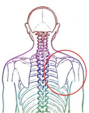 肩甲骨を後ろからみてみよう