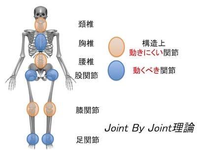 可動する関節は胸椎、股関節、足関節で固定する関節は頚椎、腰椎、膝関節に分けられます。割れを作るためにはこの概念を頭に入れておく必要があります。
