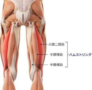 正しくストレッチできると、内転筋に加えてハムストリングスも伸ばすことができます。