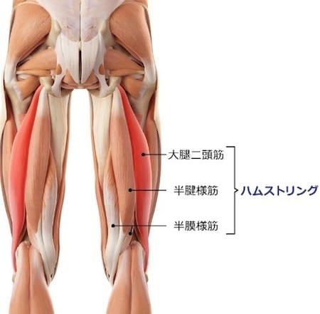 骨盤前傾にはハムストリングスの柔軟性が必要になります