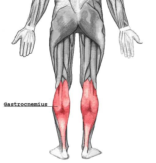 腓腹筋はふくらはぎにある筋肉です。