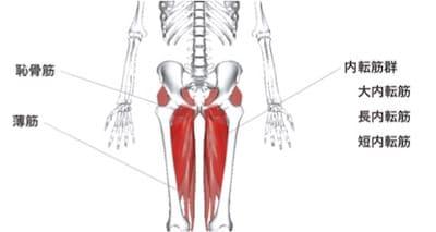内転筋群です。体重移動で最大限加速するためにこれらの筋肉の活動が必要になります。