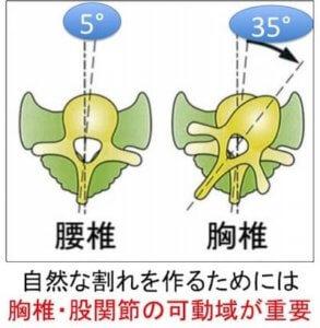 腰の背骨はひねる可動域はおよそ5°しかありません。その一方で腰の上にある胸の背骨はひねることができる可動域が35°もあります。  腰の背骨と胸の背骨では可動域が7倍も違うのです。  つまり、体の構造にあった無理のない自然な割れを作るためには胸のあたりにある胸椎の可動域がとても重要なのです。